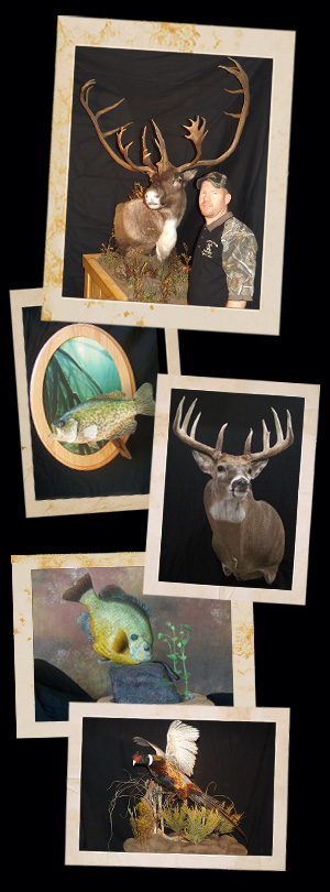 Trophy Time Taxidermy photos